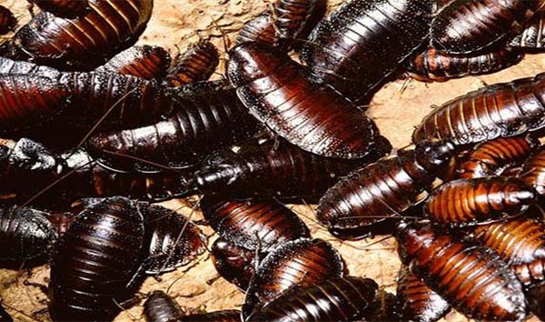 20.) Eating too many cockroaches during a cockroach eating contest (Edward Archbold in 2012).