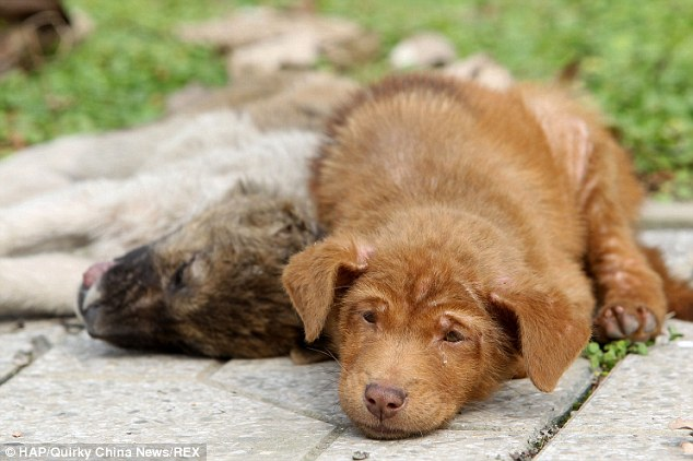 The puppy's sister was hit in the middle of the street. She was killed, but he refused to leave her side.