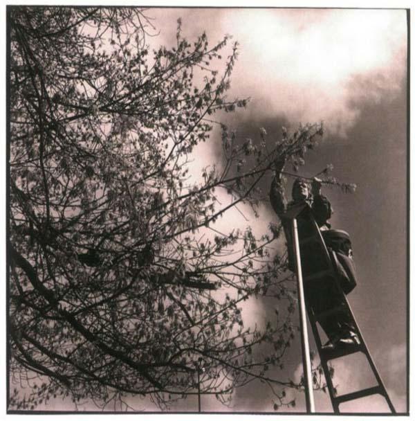 17. Pollen Collector