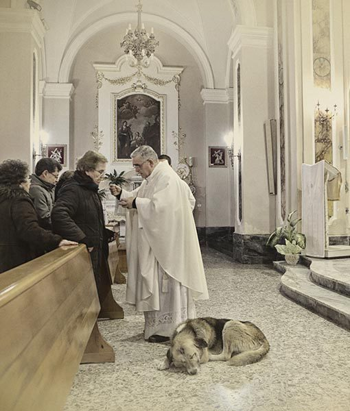 Now, he diligently waits for his master to come back. He curls up by the altar to wait for Maria.