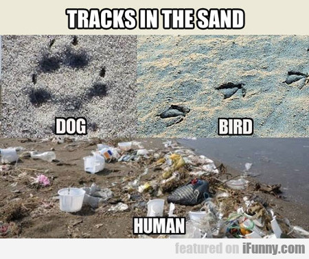 Tracks In The Sand...