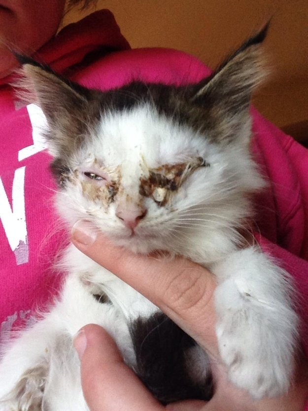 When Bandit was found, both of his eyes were so infected they were matted shut. He was also starving.