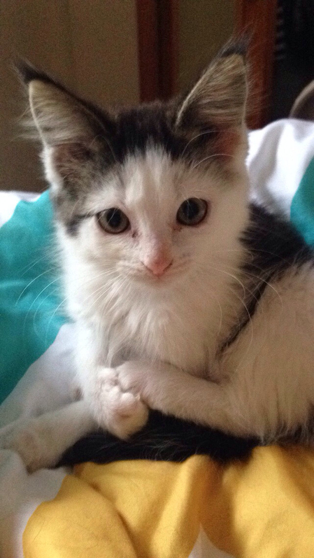 Soon enough, he was a total heart throb. We dare you not to fall in love with this kitten.