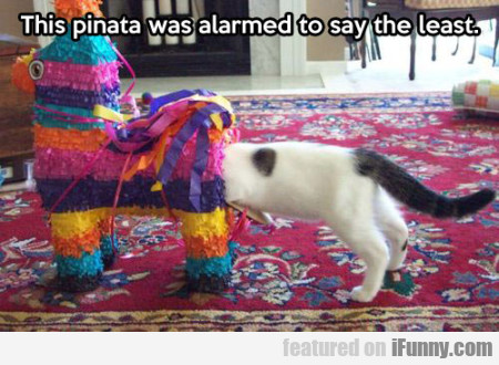 The Pinata Was Alarmed To Say The Least
